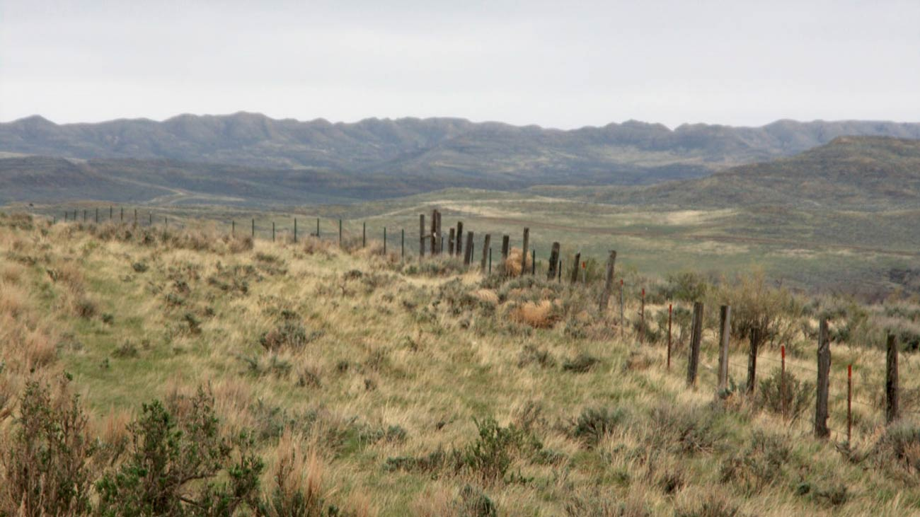 History of Wyoming Cattle Ranches