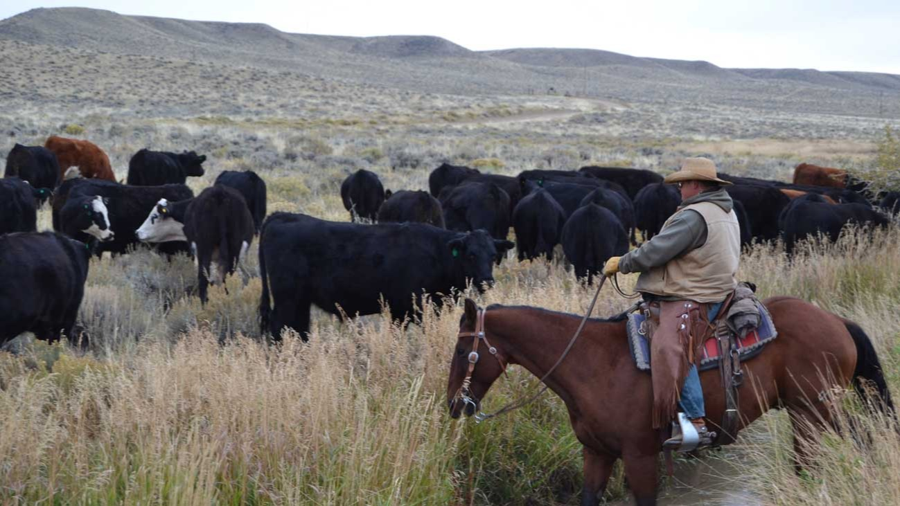 Wyoming Ranching Family, the Crofts family