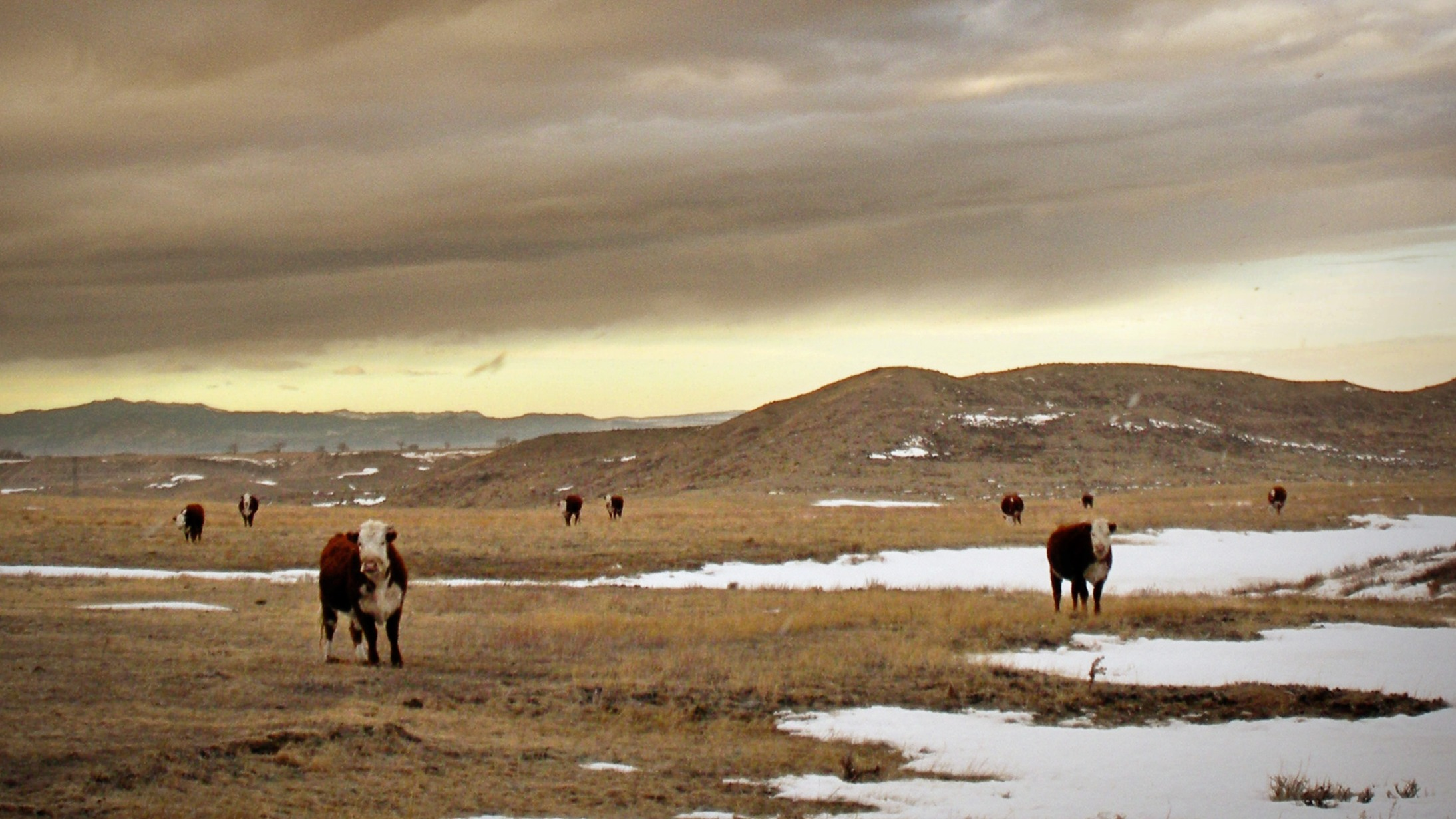 Wyoming Ranching Family, the Graves family